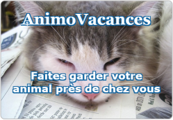 Animovacances